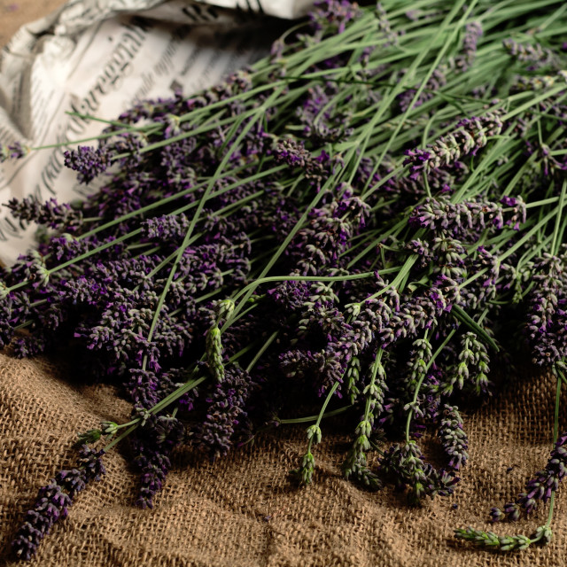 """Lavender in Group"" stock image"