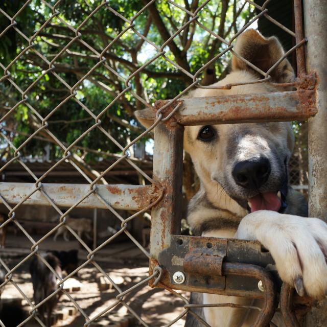 """""""Shelter Dog"""" stock image"""