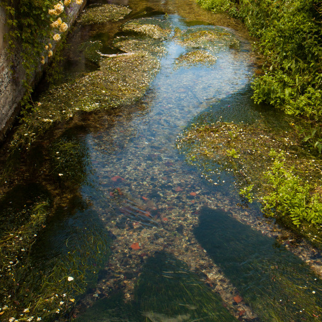 """Chalk stream at midsummer"" stock image"
