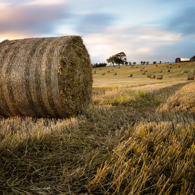 """Bales on an Ayrshire Farm"" stock image"
