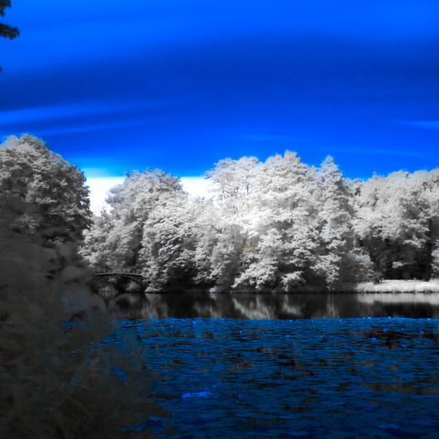 """""""Lily Pond IR"""" stock image"""
