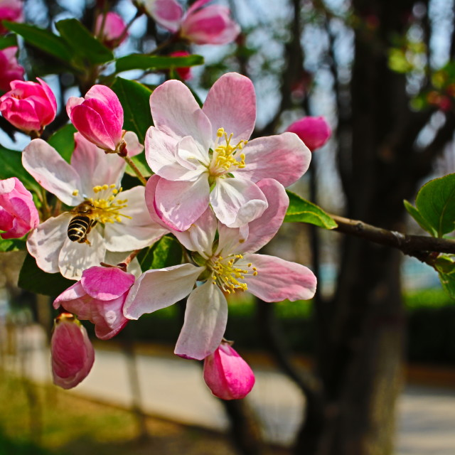 """Spring!"" stock image"