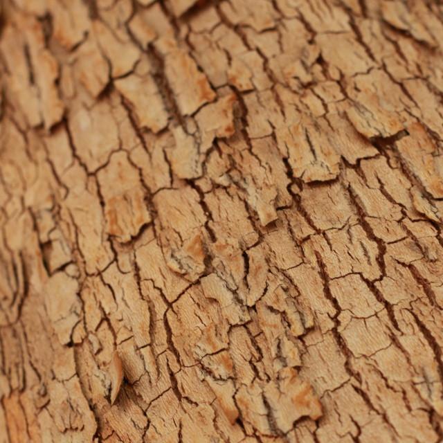 """Texture"" stock image"