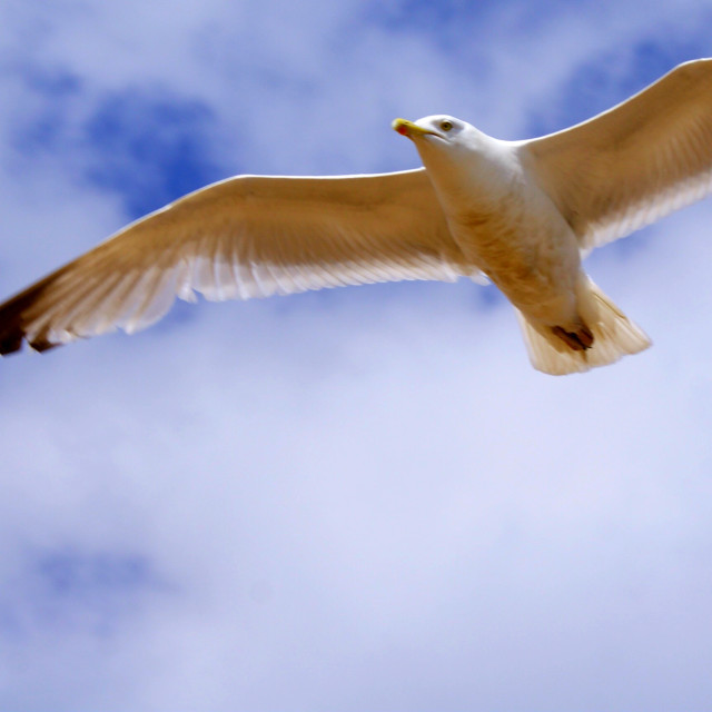 """A seagull"" stock image"