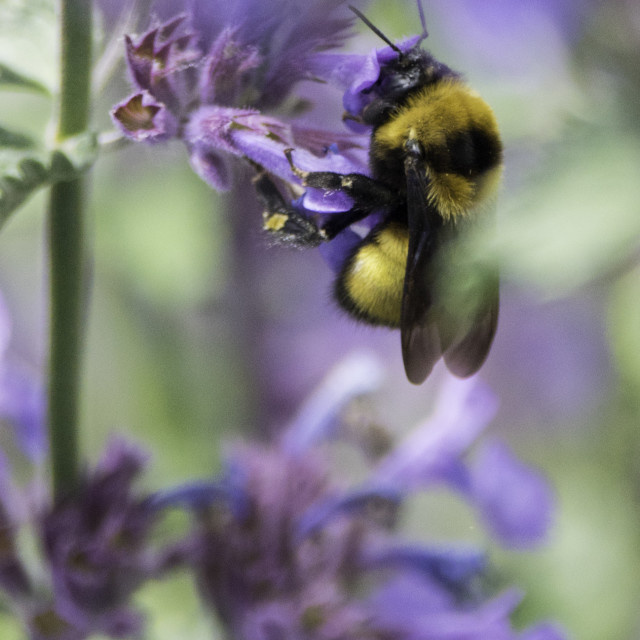 """""""Busy Bee"""" stock image"""