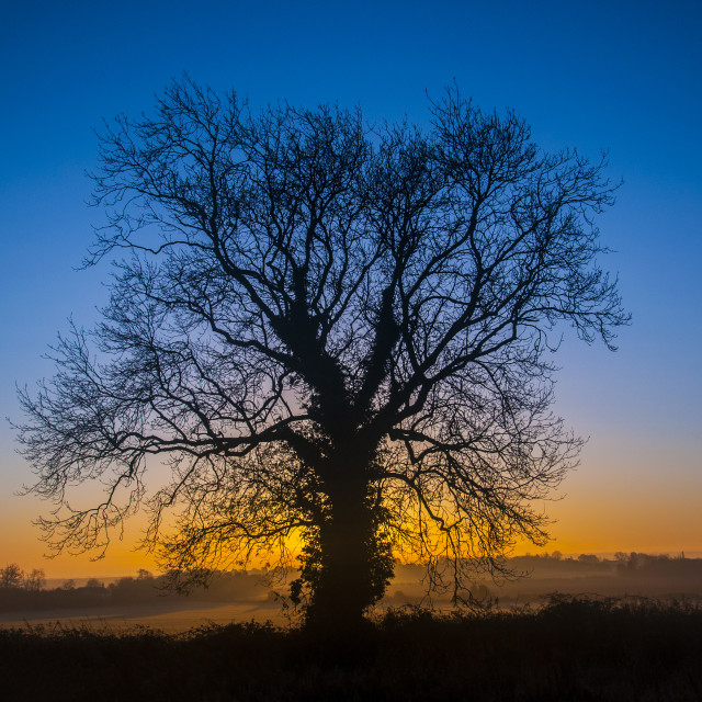 """Sunrise - behind a tree"" stock image"