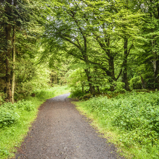 """""""Woodburn Forest Path"""" stock image"""