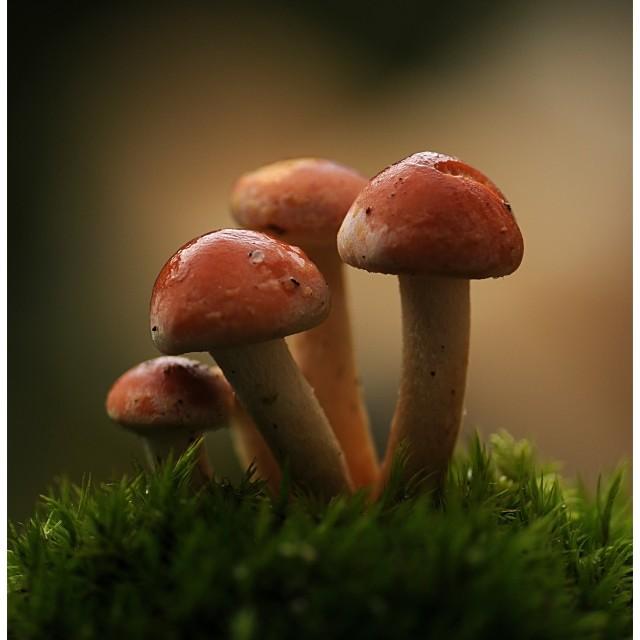 """Mushrooms1"" stock image"