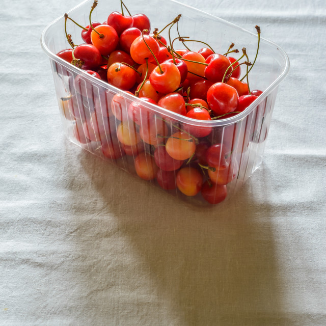 """Morello Cherries"" stock image"
