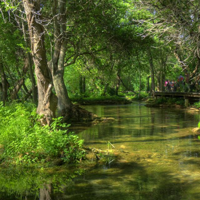 """""""Wetland, Croatia"""" stock image"""