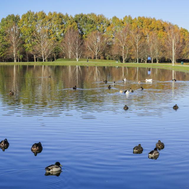 """park lake"" stock image"