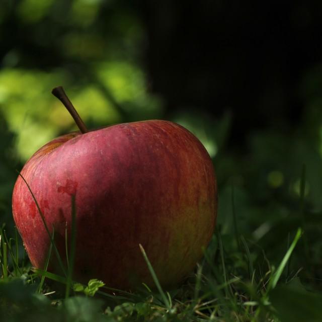 """The Newton Apple"" stock image"