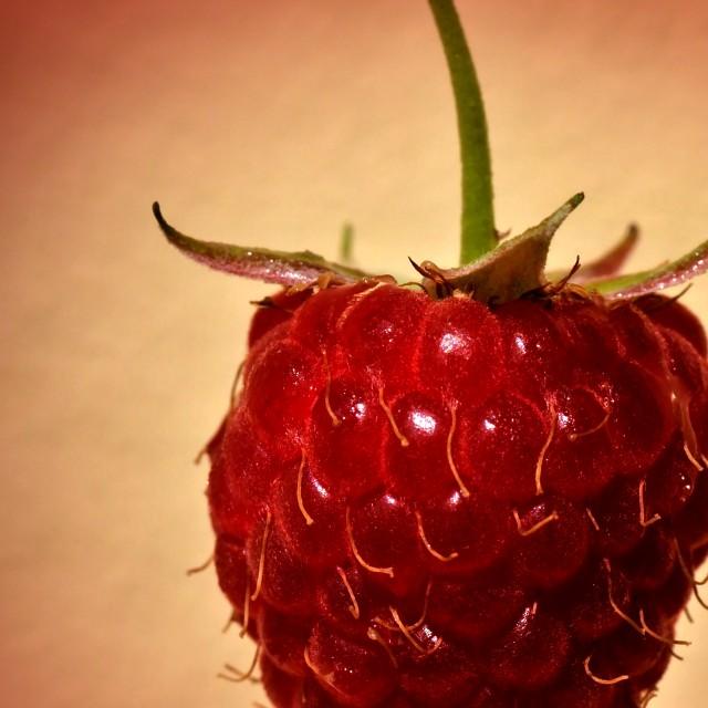 """""""the Raspberry"""" stock image"""