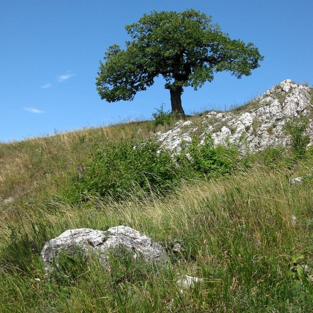 """""""The Palava ´s tree"""" stock image"""