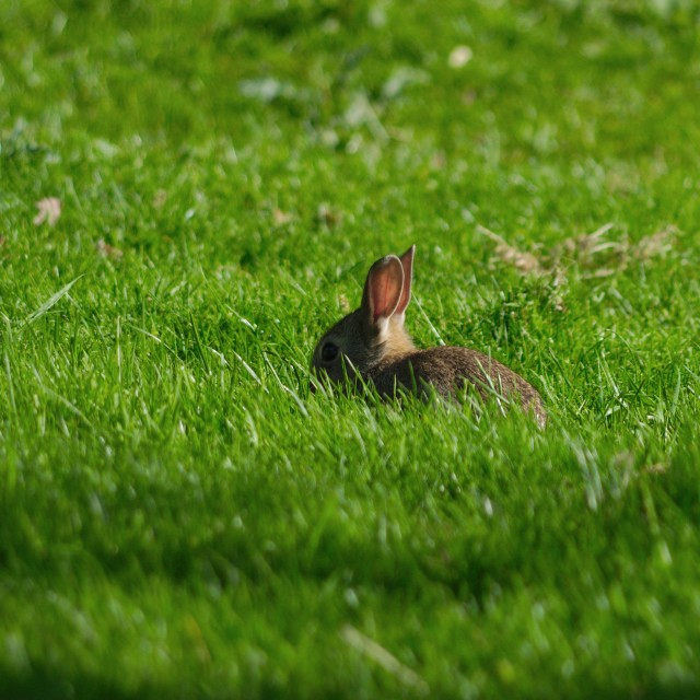 """Bunny on the meadow"" stock image"