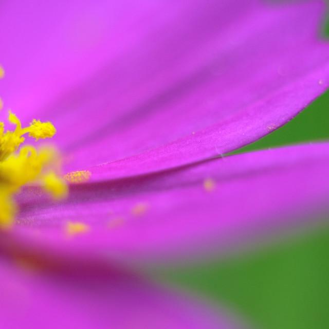 """""""Daisy Close"""" stock image"""
