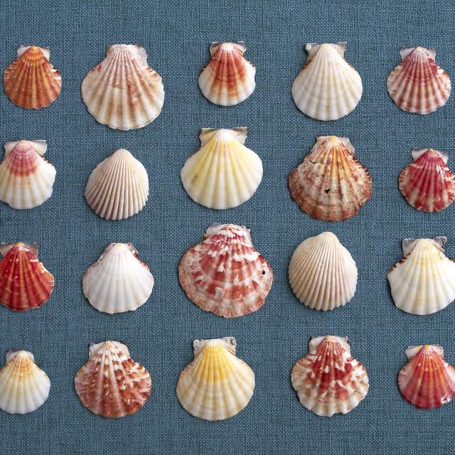"""sea Shells on blue fabric"" stock image"