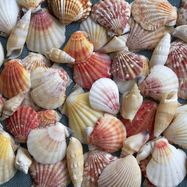 """sea shells, natural background"" stock image"