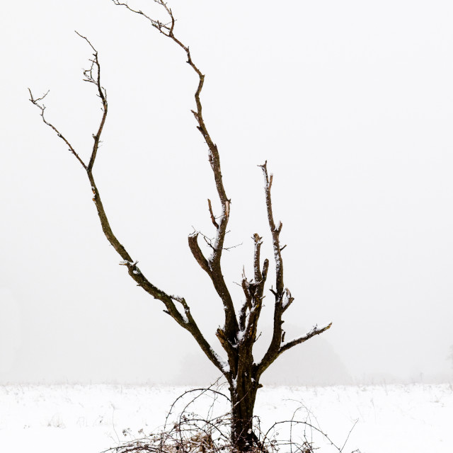 """Minimal Tree"" stock image"