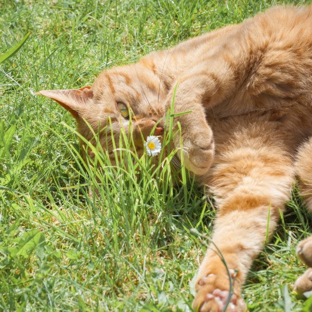 """""""cat and a daisy"""" stock image"""