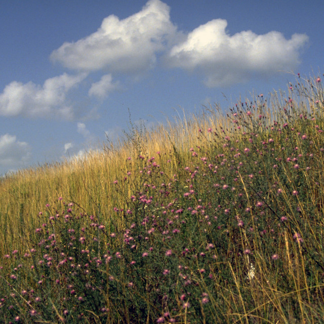"""Ozarks Native Grass Hillside (horizontal)"" stock image"