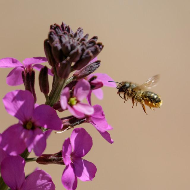 """Pollination"" stock image"