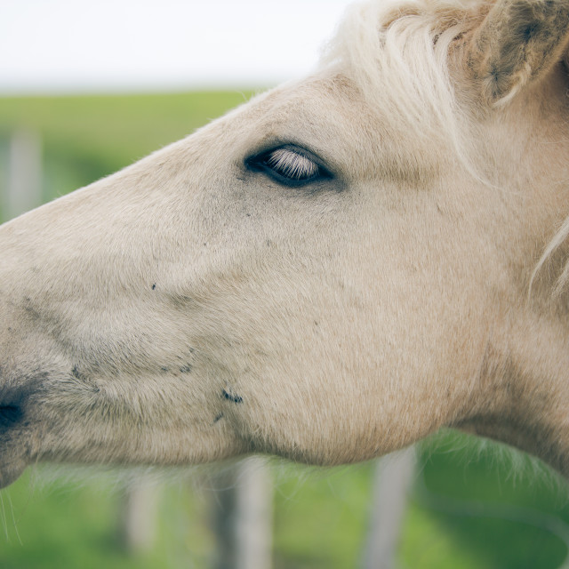 """""""portrait of a horse"""" stock image"""