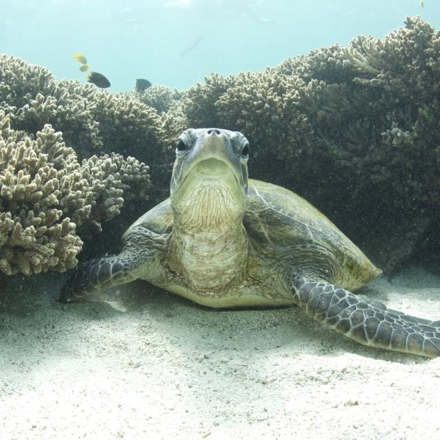 """Turtle"" stock image"