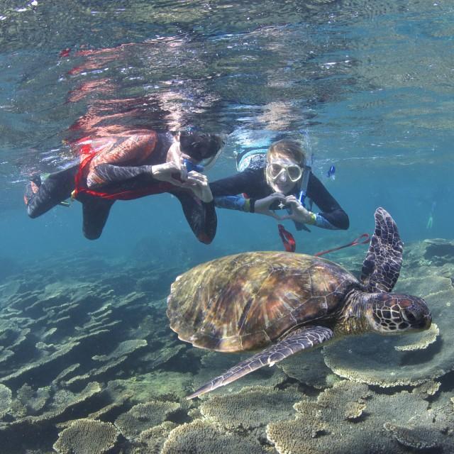 """Everybody loves turtles"" stock image"
