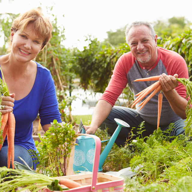 """""""Senior Couple Working On Allotment Together"""" stock image"""