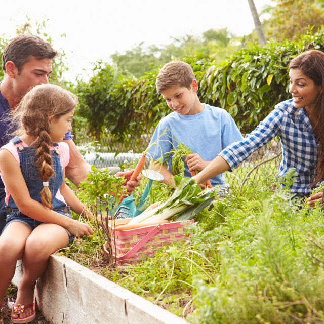 """""""Family Working On Allotment Together"""" stock image"""