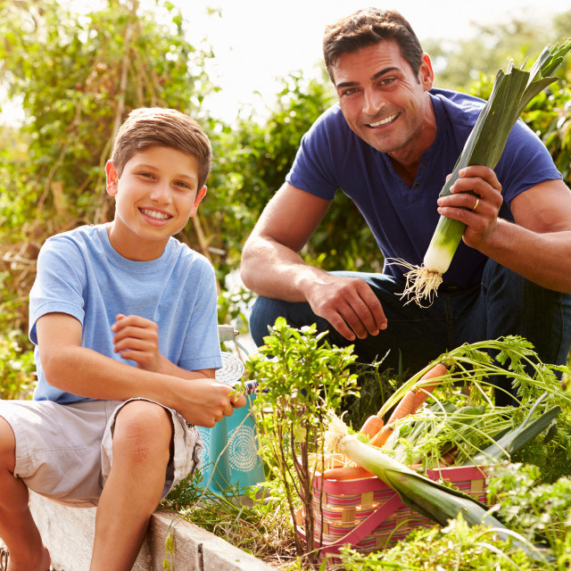 """""""Father And Son Working On Allotment Together"""" stock image"""