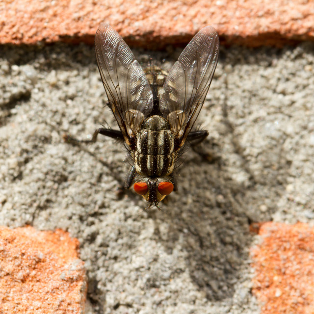 """""""A fly on a brick wall"""" stock image"""