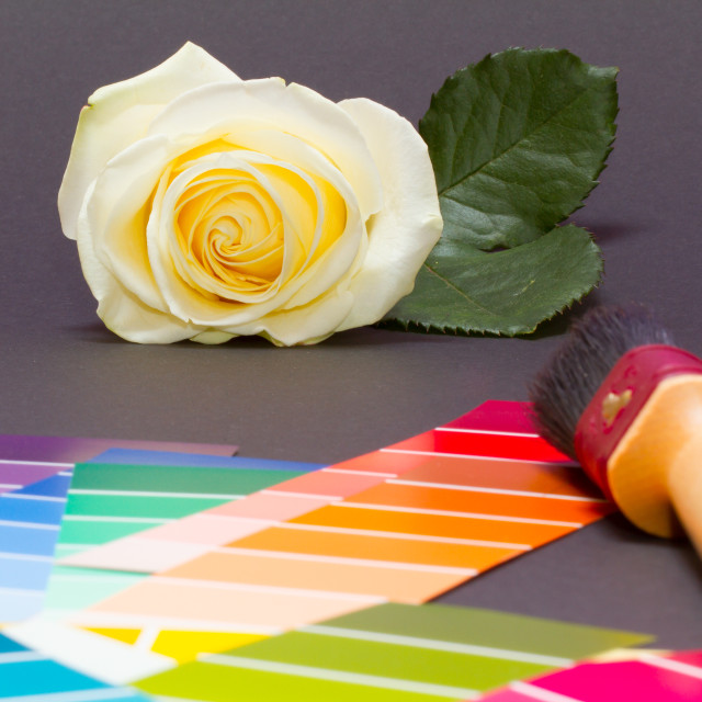 """""""Painting a white rose"""" stock image"""