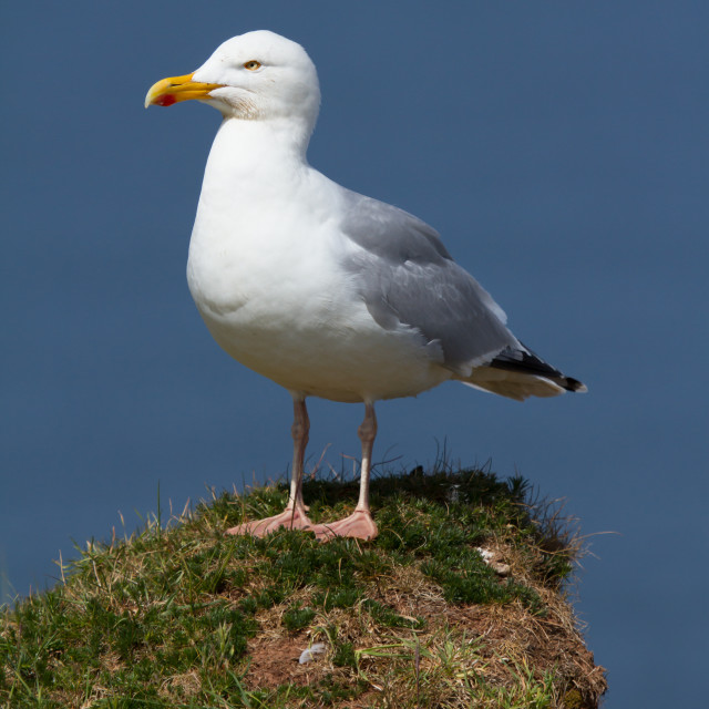 """""""A seagull on a rock"""" stock image"""