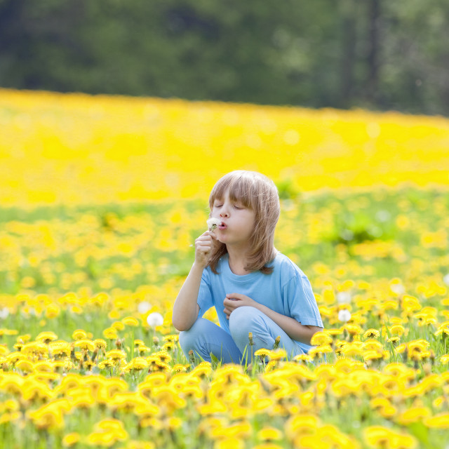 """Boy with Long Blond Hair Picking Dandelions on a Meadow"" stock image"