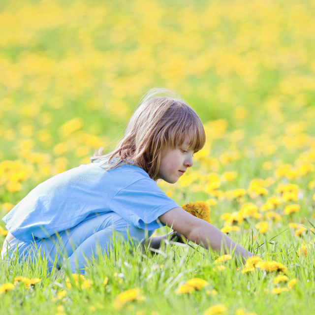"""Boy with Long Blond Hair Picking Dandelions in a Spring Field"" stock image"