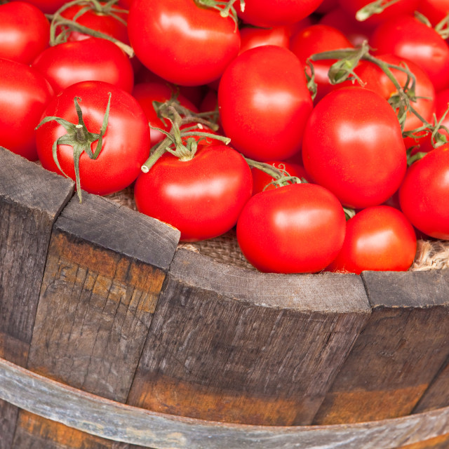 """""""Fresh red tomatoes"""" stock image"""
