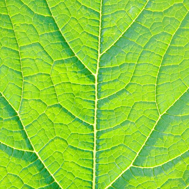 """""""Leaf detail"""" stock image"""