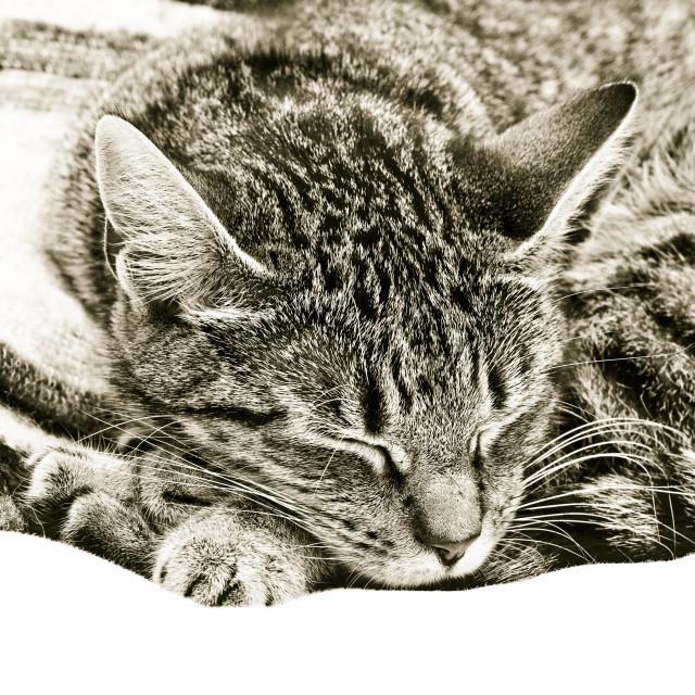 """Sleeping cat"" stock image"