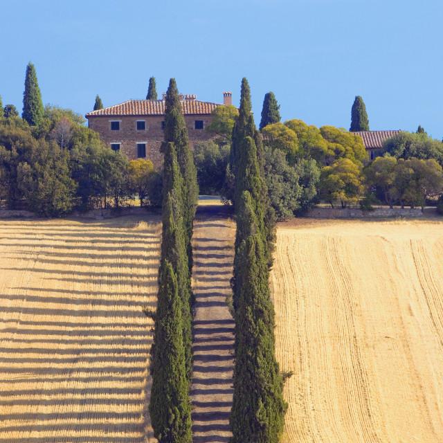 """""""Italy, Tuscany - farmhouse with cypress tress."""" stock image"""