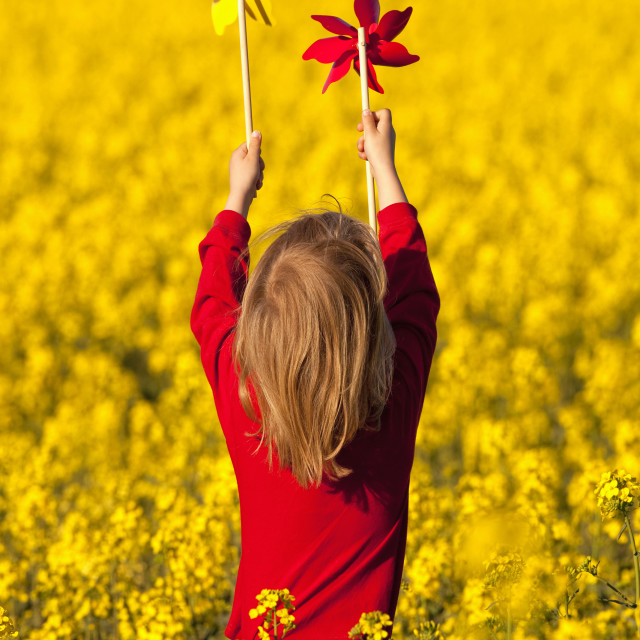 """boy with long blond hair playing with pinwheels in canola field"" stock image"