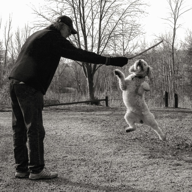 """""""Dog Playing with stick"""" stock image"""