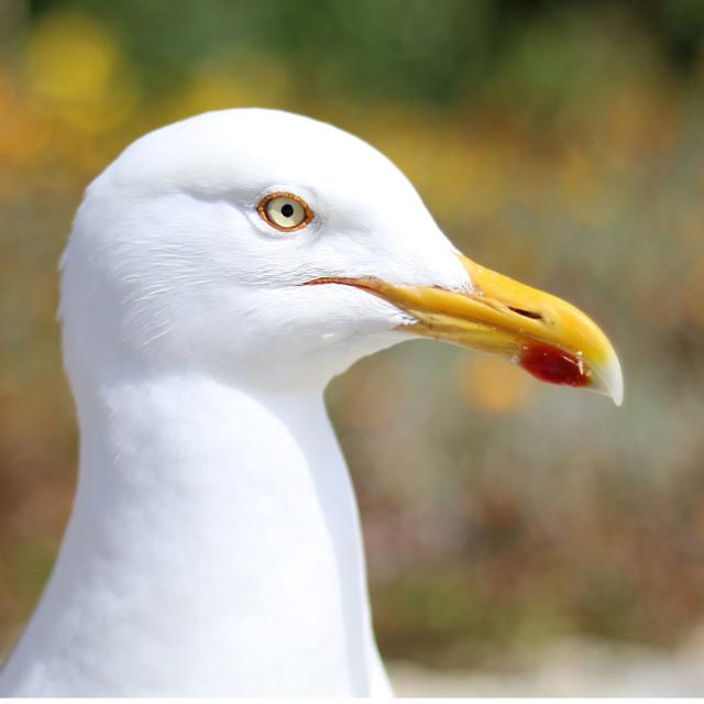 """""""Gull"""" stock image"""