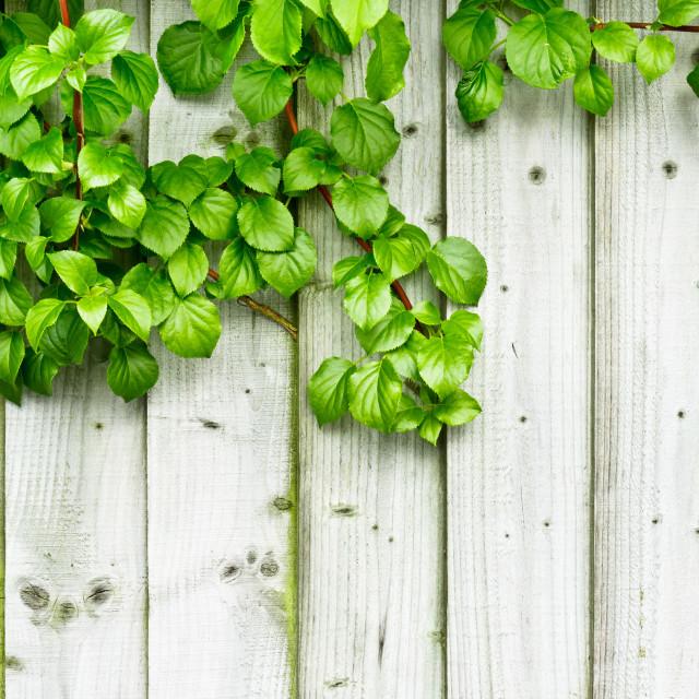 """""""Fence background"""" stock image"""