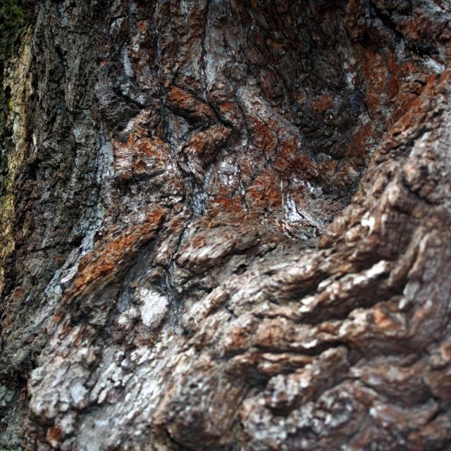 """Treescape #1"" stock image"