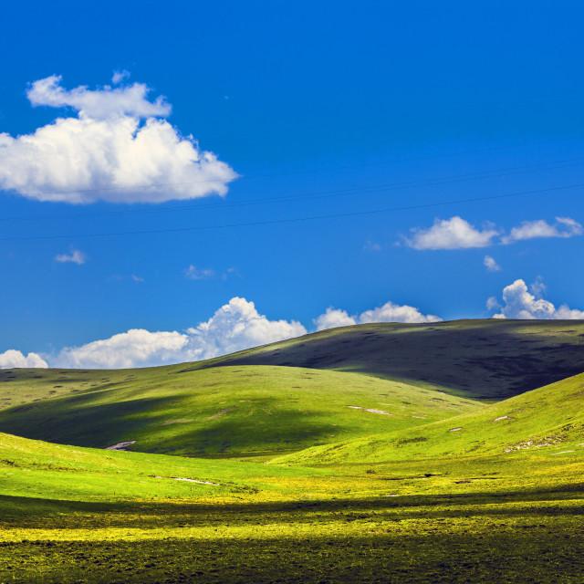 """grassland"" stock image"