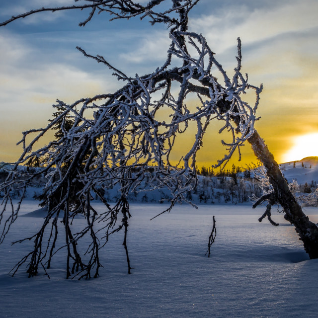"""Sunrise in winter"" stock image"