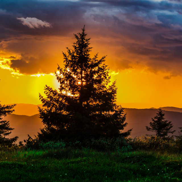 """sunset in woodland"" stock image"
