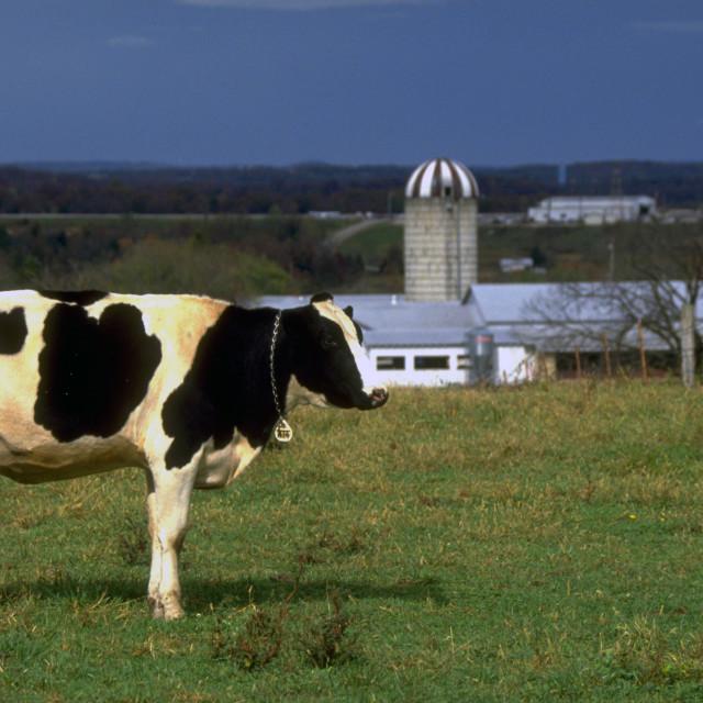 """Ozarks' Dairy Farm"" stock image"